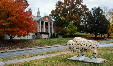 Buffalo statue in fall
